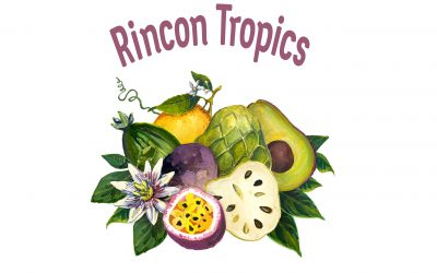 Welcome to Rincon Tropics: Subtropical fruit from me to you